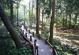 미평 봉화산 산림욕장