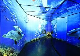 280여 종의 다양한 해양생물 아쿠아플라넷
